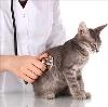 Ветеринарные клиники в Кингисеппе